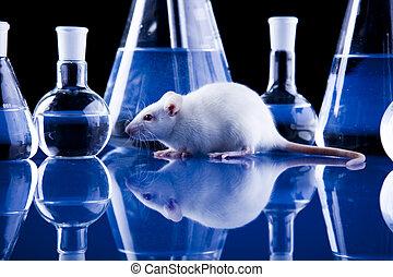 ネズミ, 実験室