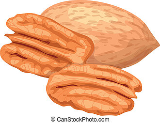 Pecan. - Pecan nuts isolaterd on white background.