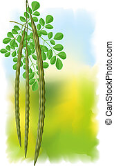 Moringa oleifera Vector illustration on fullcolor background...