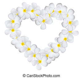Plumeria flowers heart isolated on white background