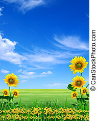 Big meadow of sunflowers Design of nature