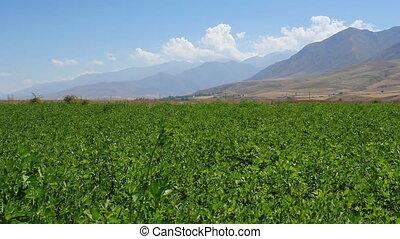 Green field 3