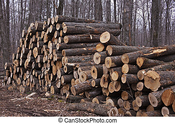 Wood ready to be taken from the forest