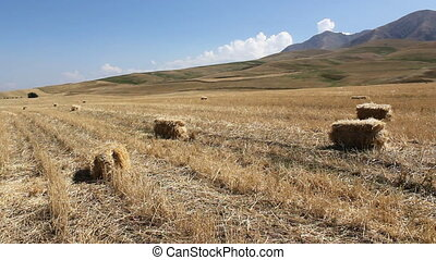Agriculture 2 - Farm machinery gathering hay for animal...