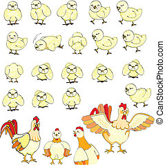 Chicks family