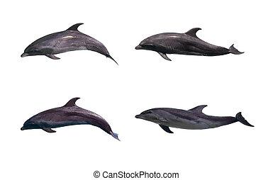 delfín, aislado
