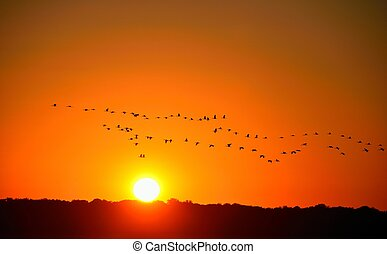 flock of birds at sunset - flock of tropical birds in...