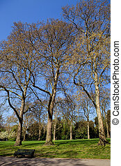 hyde park - trees at the hyde park in london, uk