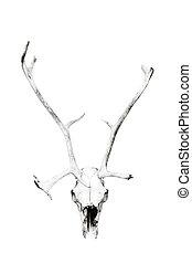 Deer skull - Weathered deer skull, black and white, isolated...