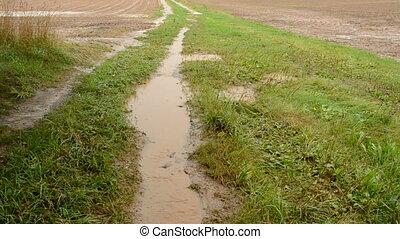 summer end rain in the field - summer end rain in the farm...
