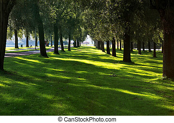 tree rows - two rows of trees in the park
