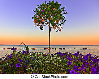 Colourful Ocean Sunset With Flowers