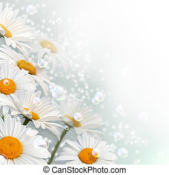 Daisy - Card with daisy, bubbles and stars