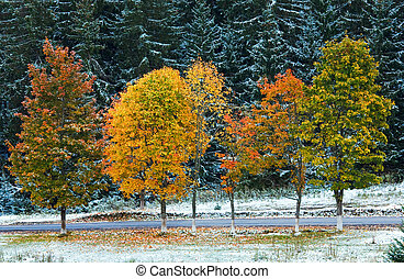 First winter snow and autumn colorful foliage near country road