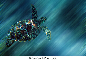 Sea turtle - Turtle in China sea around Apo Island -...