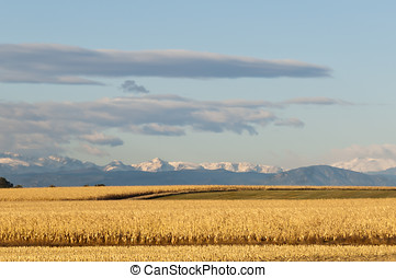 Beautiful Rural Morning - Morning in rural Colorado looking...