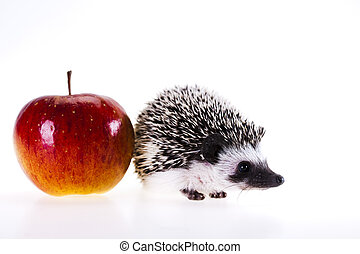 Hedgehog with apple - A hedgehog is any of the small spiny...