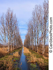 Tree line - Nice, a parallel tree line and a little river in...