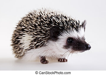 Hedgehog body - A hedgehog is any of the small spiny mammals...