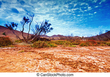 Tree near sand dunes in the desert, Spain, Andalucia,...