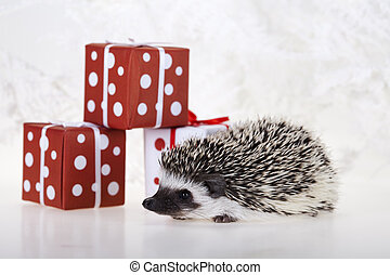 Hedgehog christmas - A hedgehog is any of the small spiny...