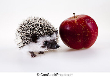 Autumnal animal - A hedgehog is any of the small spiny...