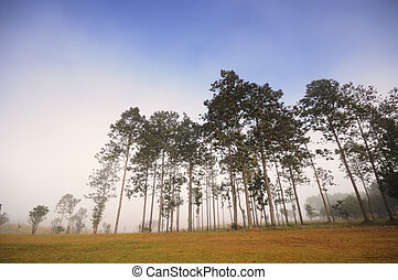 Trees in the forest - Group of tall trees in the forest...