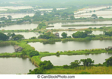 Fishing ponds and wetland area