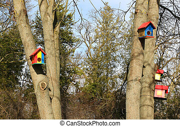 Bird houses on trees in the forest