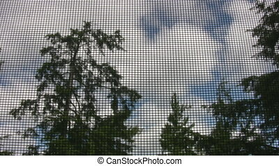 View of trees through bugscreen.