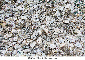 Oyster shells on the ground