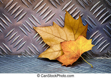 Leaves on Aluminum - Two fallen dry leaves over an...
