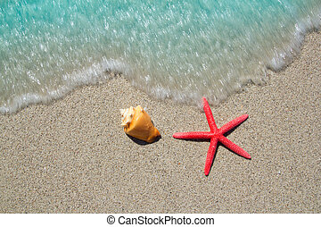 beach starfish and seashell on white sand