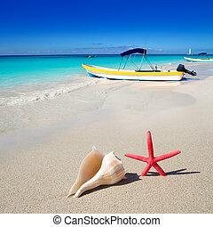 beach starfish and seashell on white sand - beach starfish...