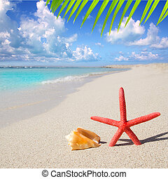 beach starfish and seashell on white sand of Formentera...
