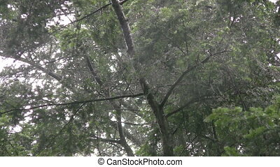 Under wet trees. - Underneath wet, dripping trees. Rainstorm...