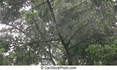 Under wet trees.