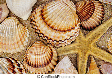 seashell and seastar - a pile of seashella and a seastar on...