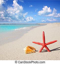 beach starfish and seashell on white sand