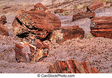 Petrified Trees - Petrified trees in the petrified forest in...