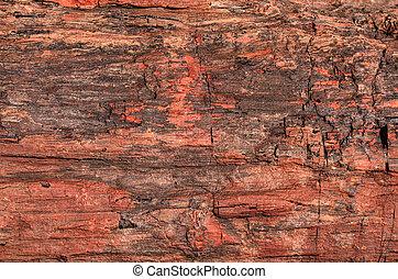 Petrified Wood - Closeup texture of a petrified tree