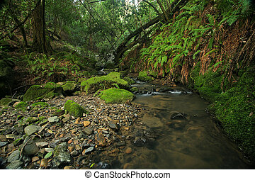 A remote prehistoric rain forest with large ferns, located...