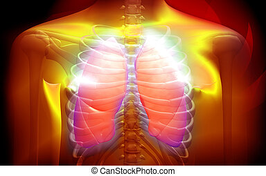 Human body and lungs - Digital illustration of a human body...