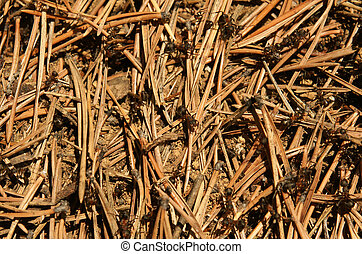Anthill, for backgrounds or textures