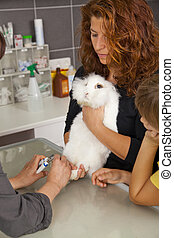 rabbit getting claws cut - A white domestic rabbit getting...
