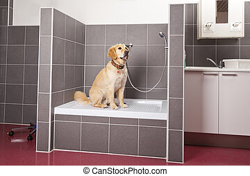 dog sitting in shower - A dog sitting in the animals shower...