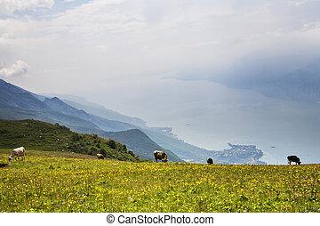 lake Garda - View to lake Garda from height of 2000 meters...