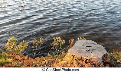 tree stump on yhe lake coast