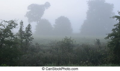 summer wild landscape and mist