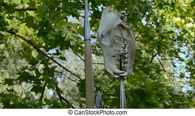 bear cranium on foliage background and wind